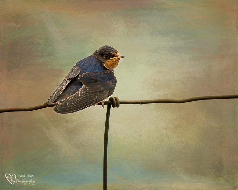 Birds, Beautiful Birds