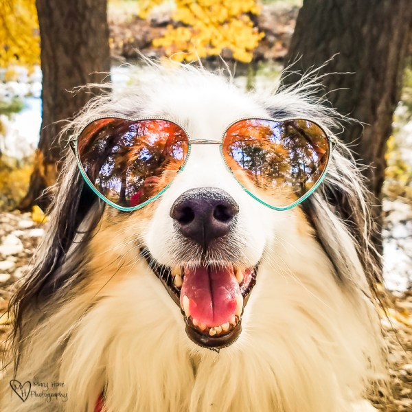 Cute Aussie with sunglasses