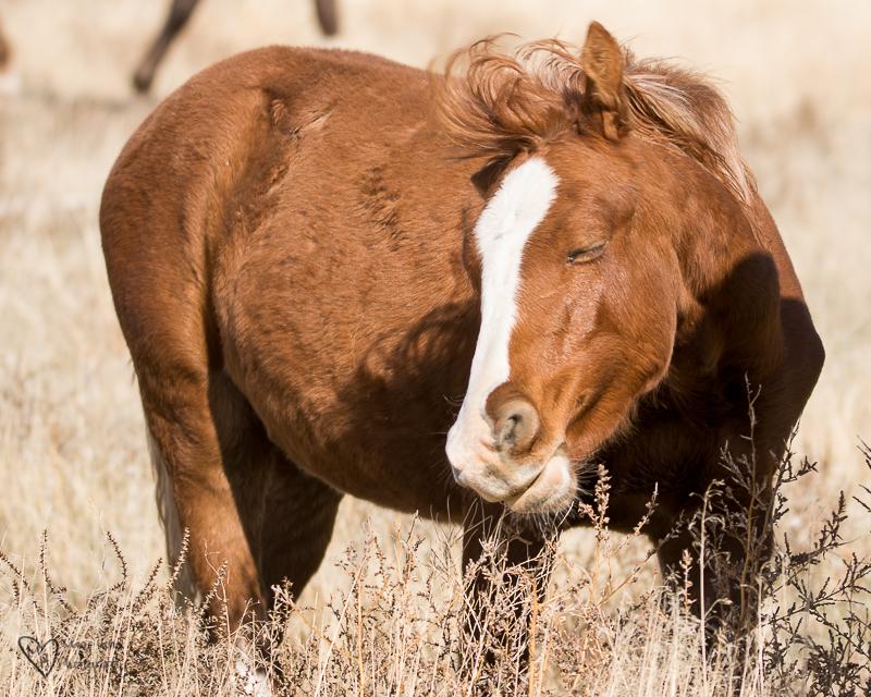 Happy wild horse foal