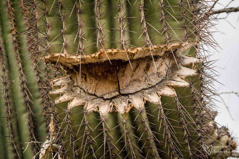 Desert Textures saguaro cactus