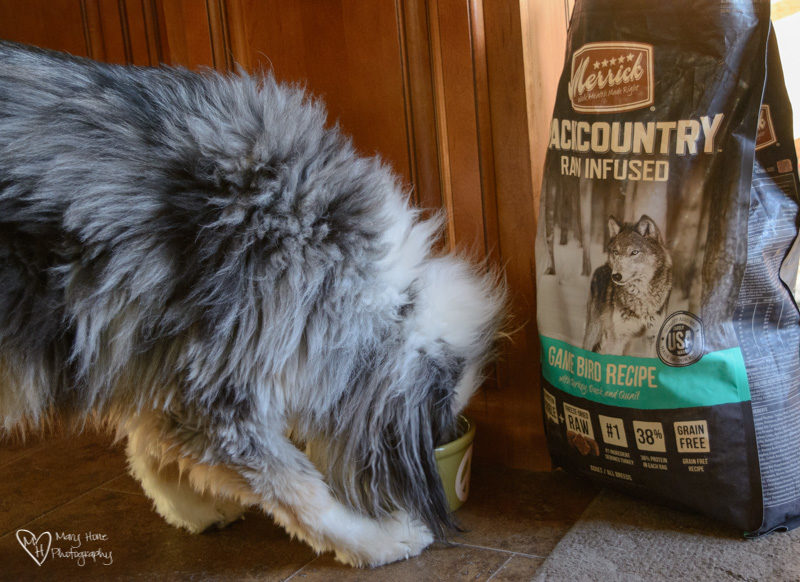 Merrick backcountry dog food, Backcountry Dogs, Deserve Merrick Backcountry Food and Treats