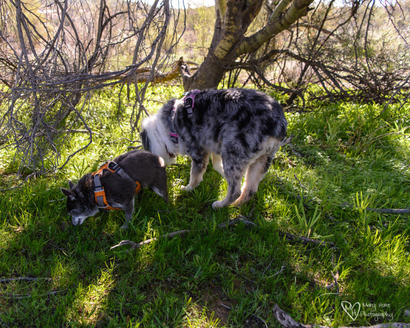 dogs eating fresh grass