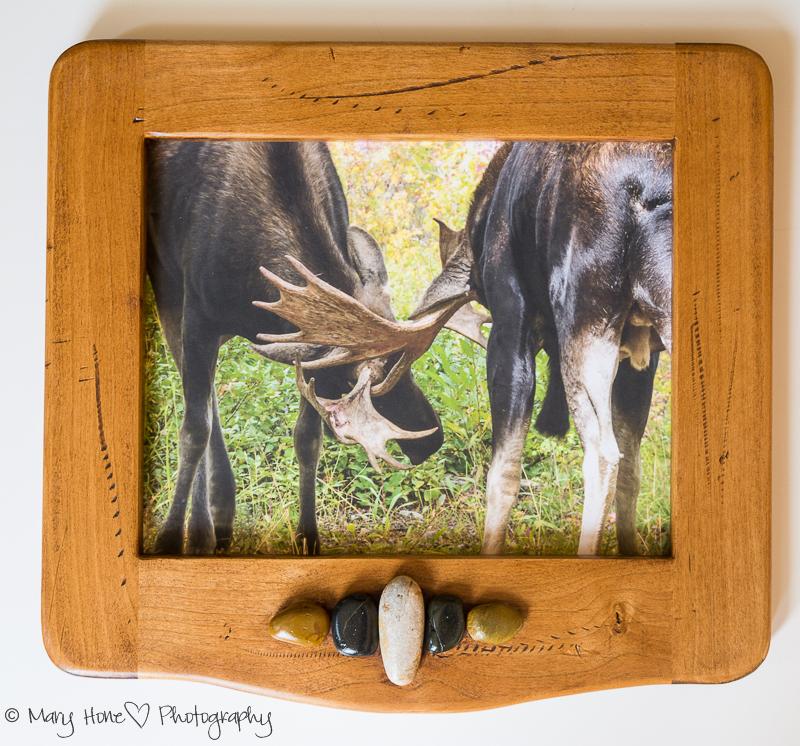 framed photo of moose