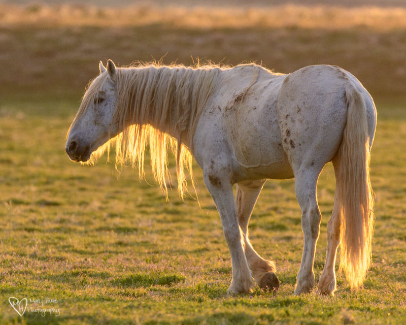 wild horse stallion, Nothing Like a Little Wild Horse Therapy