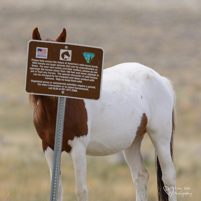 funny wild horses