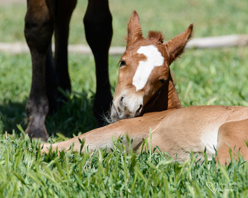 a mothers love is everywhere, wild horse foal