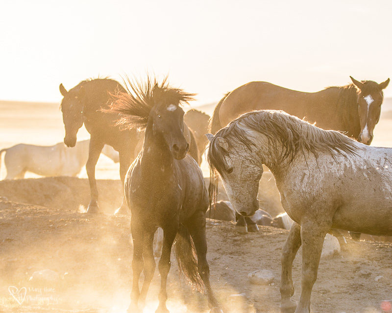 Wild Horses, Hoof beats on my heart