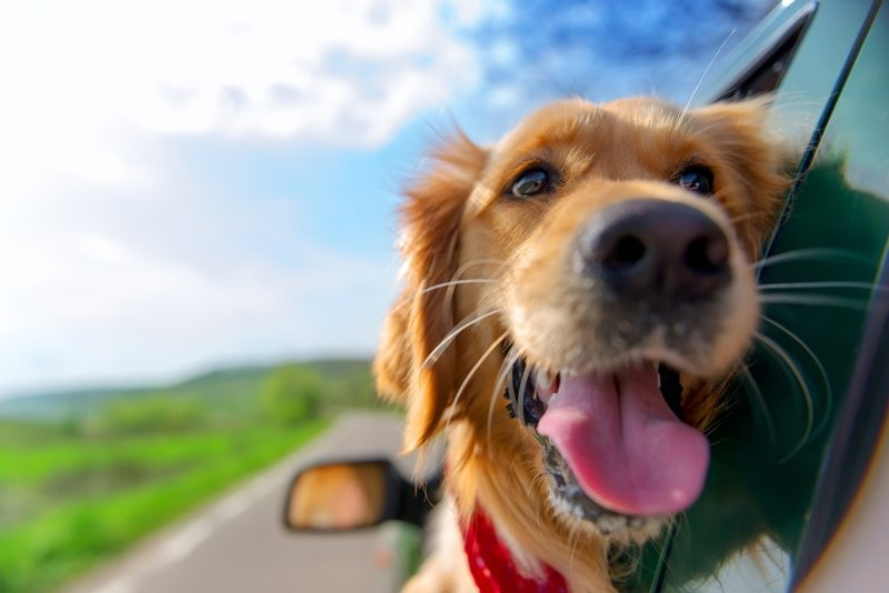 Vacationing With Your Dogs in an RV