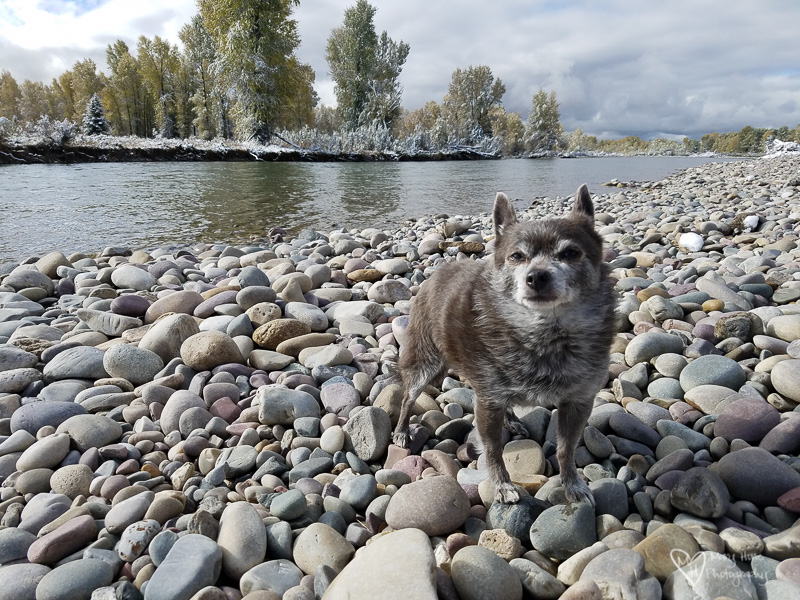 roxy at the river