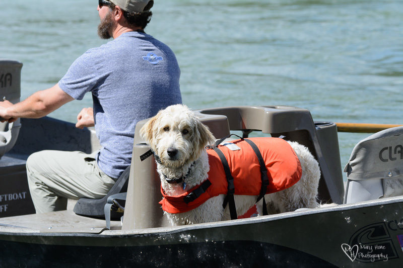 dog with life jacket in boat