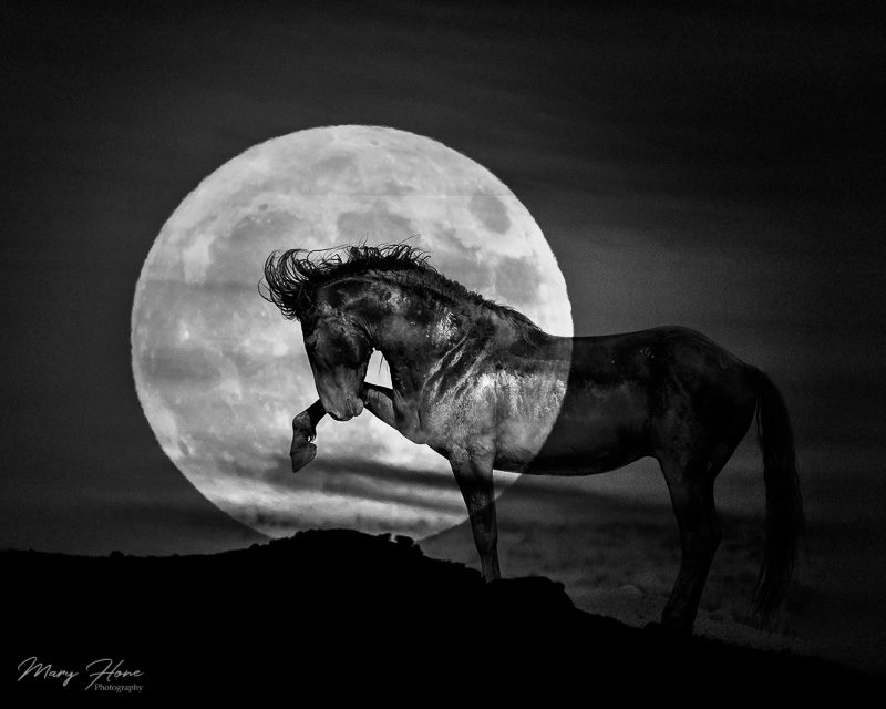 full moon and wild horse
