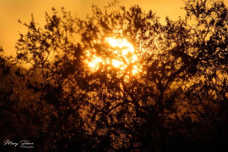Arizona sunsets and other great stuff