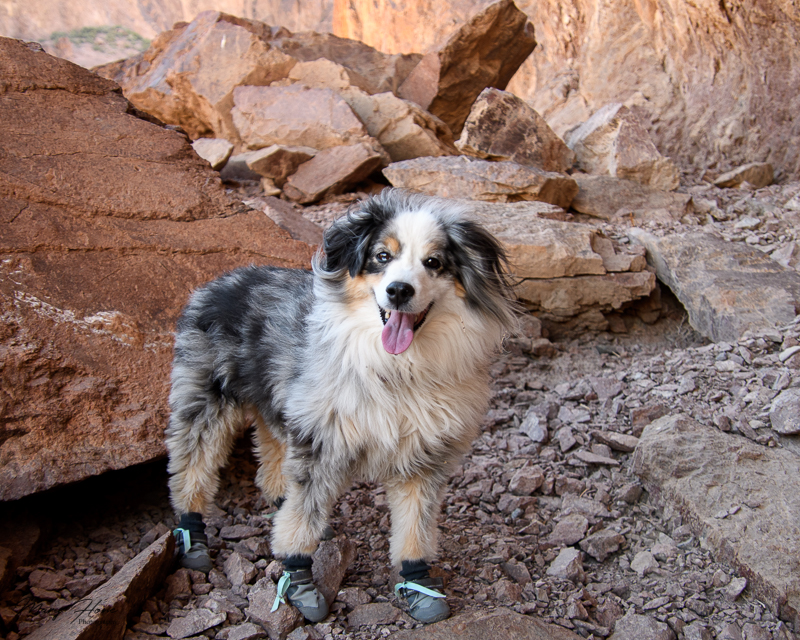 hiking with dogs in the desert