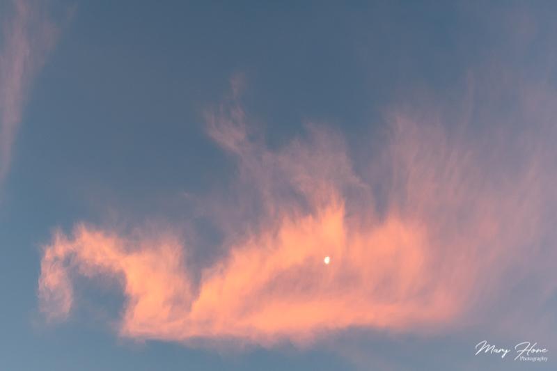 swan cloud