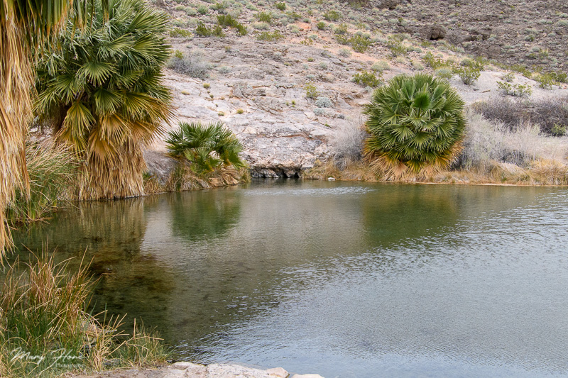 Boondocking at Lake Mead, rogers spring