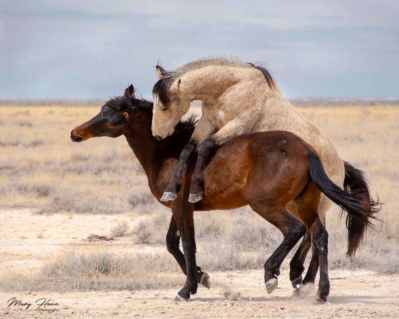 Humorous Wildlife Photos