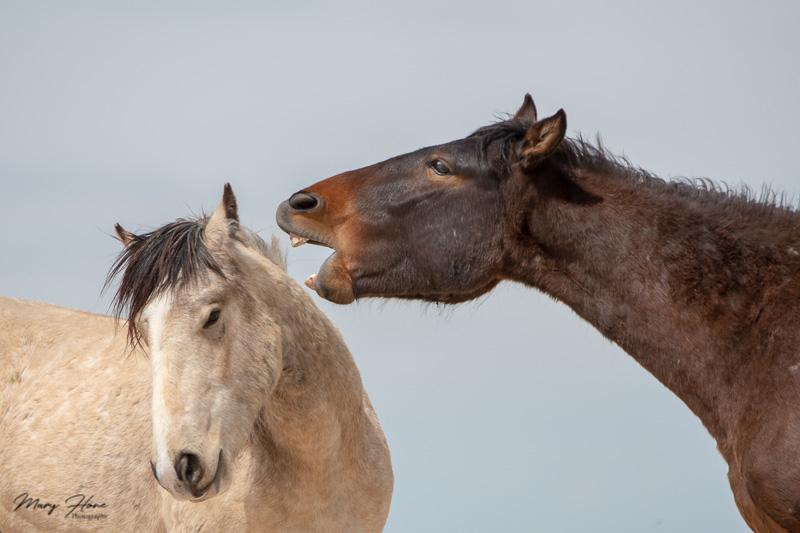 Humorous Wildlife Photos, funny wild horse photos