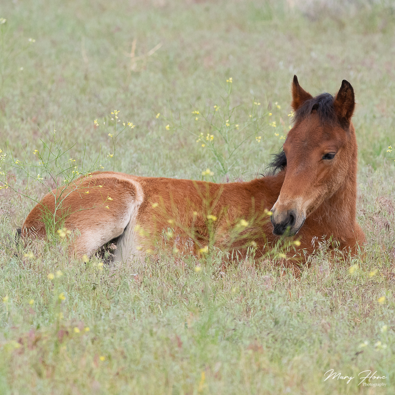 Wild Foals in Wild Flowers