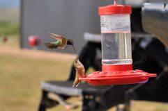 Hummingbird wars at Taylor Park