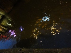 towpath_night_03