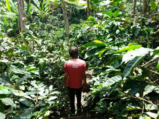 In this family-owned, organic coffee plantation in Salento, Carlos is a 3rd generation grower.