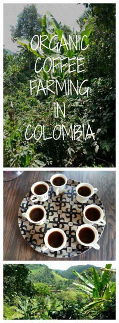 Organic Coffee Farming in Colombia!