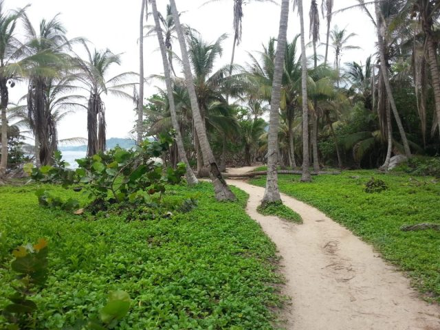 The Path to Tayrona Park