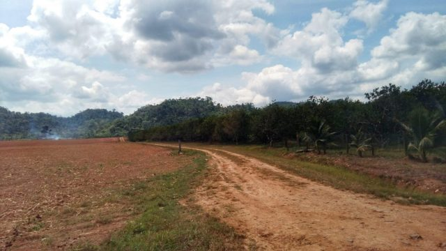 The dirt road to the Actun Tunichil Muknal Caves