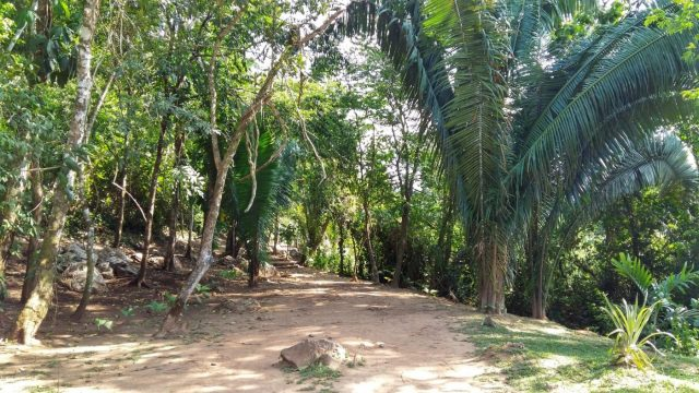 The footpath leading to the ATM caves - no tapirs to be seen!