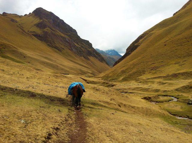 The trek to Machu Picchu - following the emergency horse. Photos of Machu Picchu