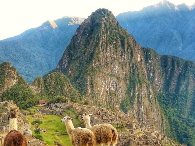 Machu Picchu Llamas - photos of Machu Picchu
