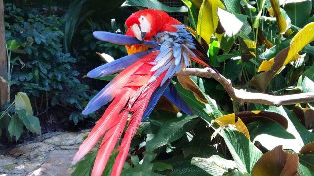 Macaw Mountain Bird Park in Copan Ruinas Honduras