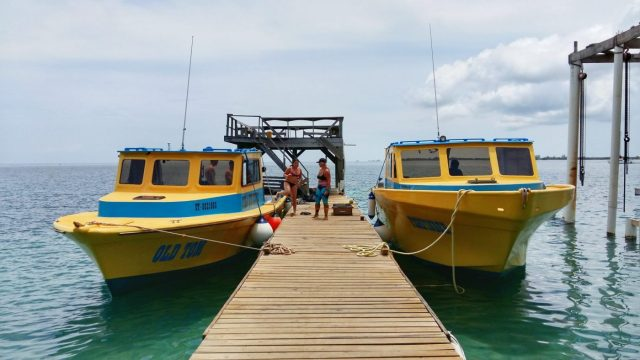 Floating Around at the Utila Dive Center Dock