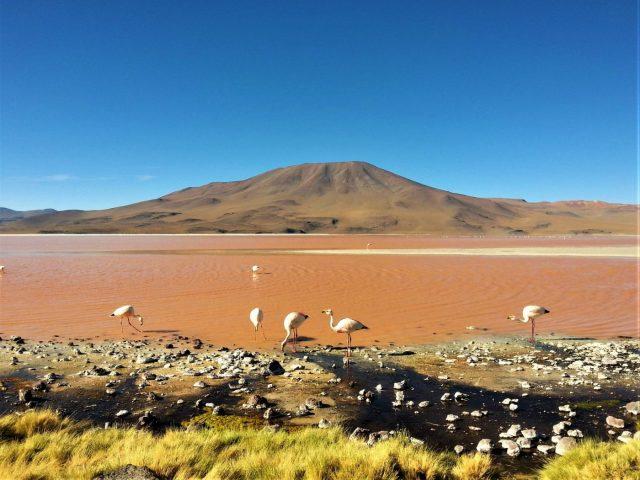 Uyuni Salt Flats: El Salar de Uyuni Tour in Bolivia - One of the Coloured Lagoons, with Flamingos