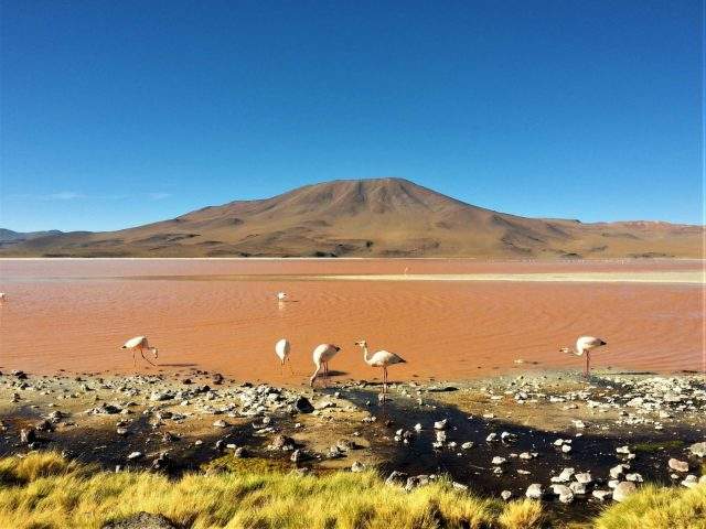 Uyuni Salt Flats: El Salar de Uyuni Tour in Bolivia - One of the Coloured Lagoons, with Flamingos