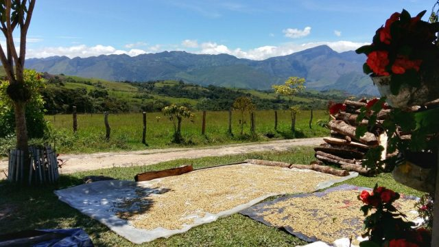 Coffee drying outside a house near Las Gachas, Guadalupe Colombia