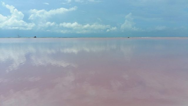 The pink lakes Mexico at las Coloradas near Rio Legartos. Beautiful reflections in the pale pink water
