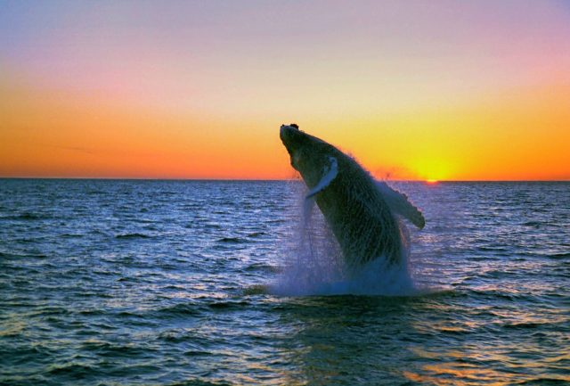 Unique Activities in Iceland - Visit the Whale Musuem, or see the real thing! Photo: Iceland.is