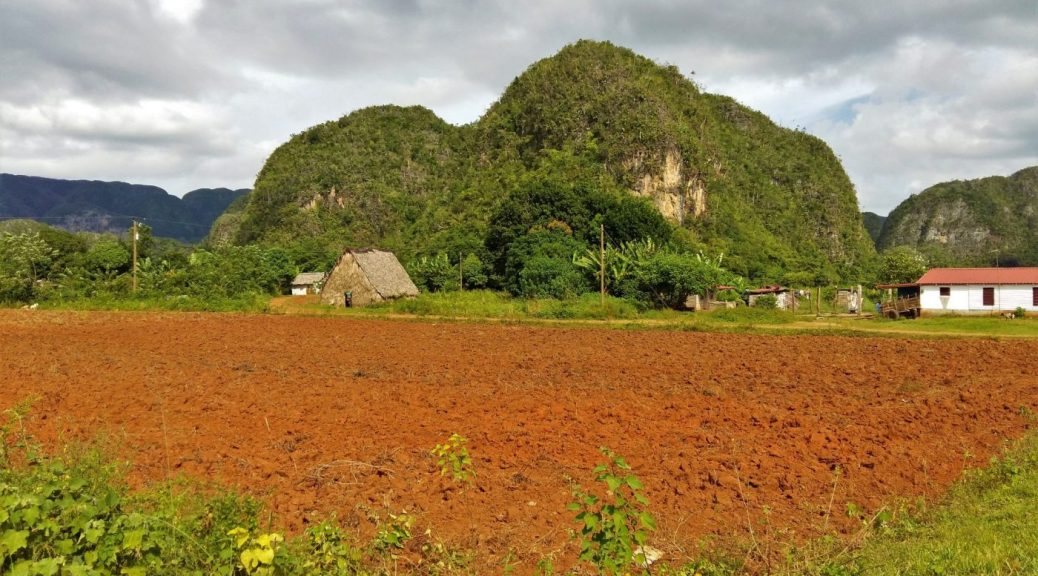A tobacco field and house in Vinales Cuba next to a Mogote