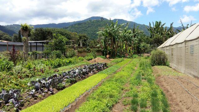 What to do in Antigua Guatemala - Coaba Organic Farm