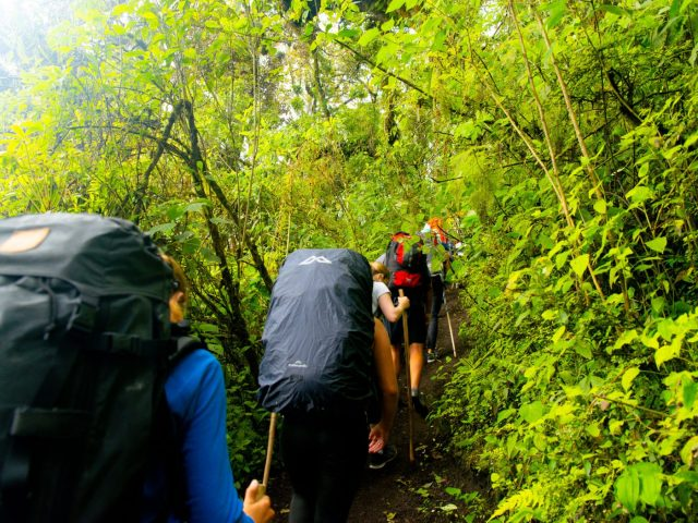Beginning the Acatenango Hike through the forest