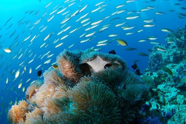 Scuba Diving at Byron Bay - Byron Bay Backpacking Guide