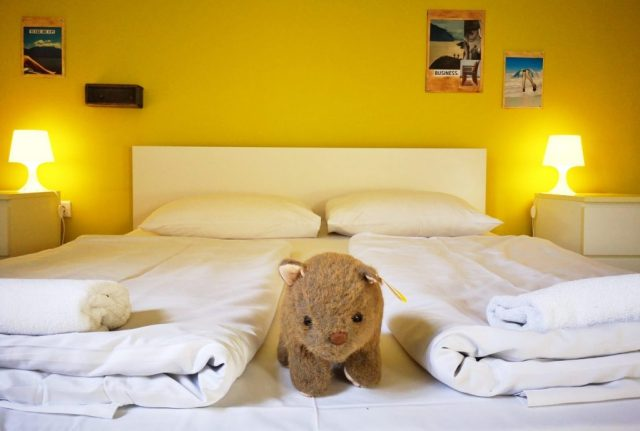 Wagner Wombat getting comfy at the wombat's Hostel in Budapest