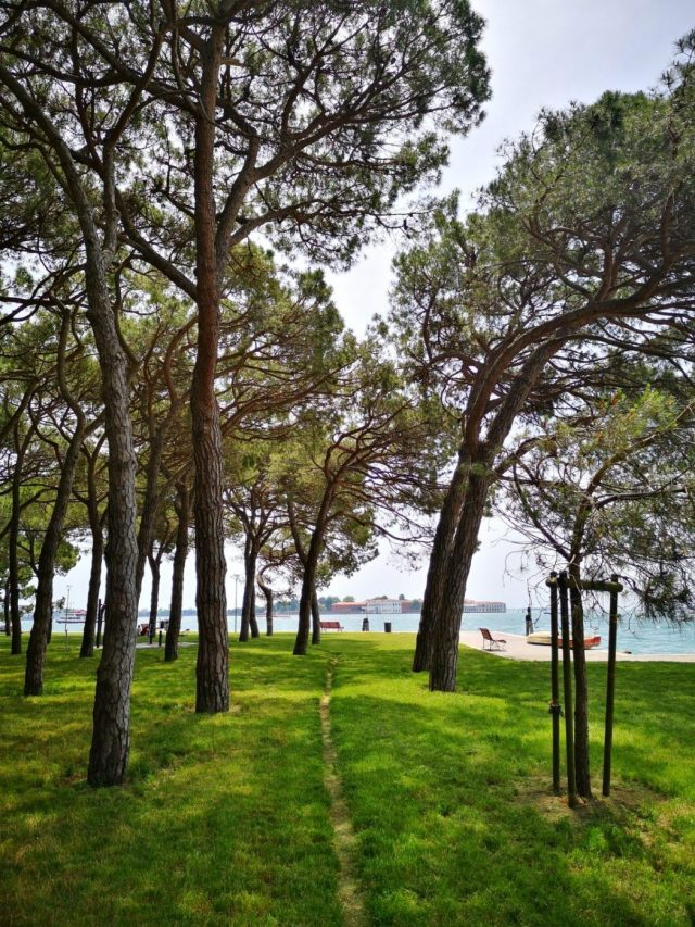 Lush green grass and trees in Remembrance Park offer cool respite from the rest of Venice