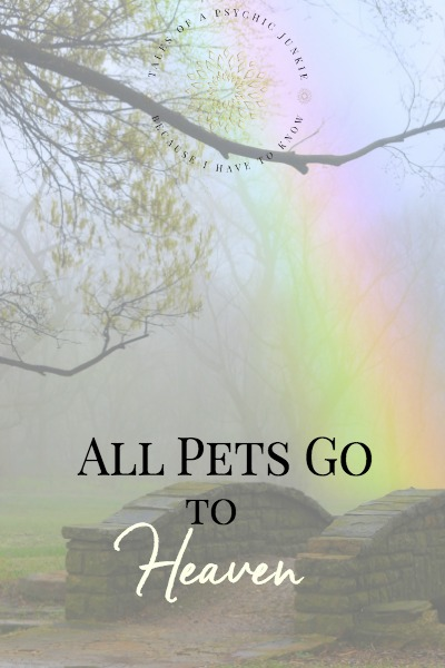 The Rainbow Bridge: All Pets Go To Heaven