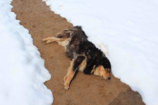 Nicks dog, sunbathing