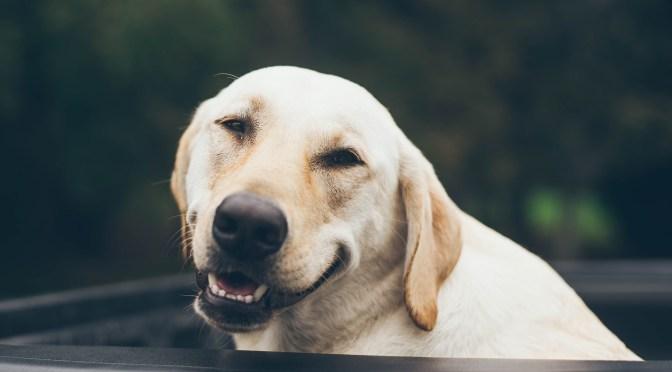 The Half-Smile