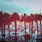 palm-port1_Fotor