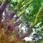 strange-tree2_Fotor