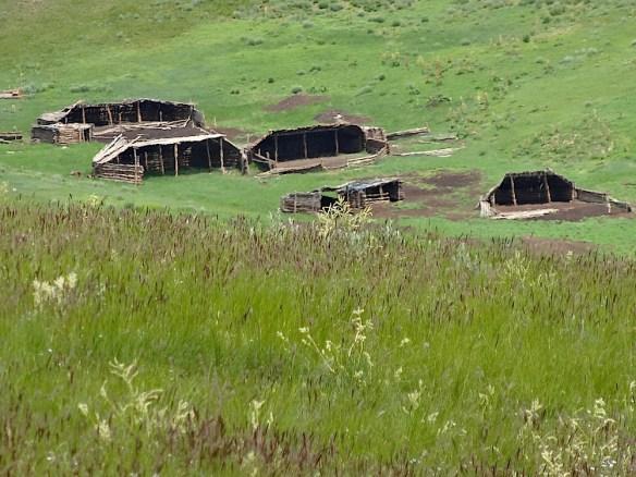 animals winter shelters mongolia